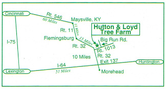 Hutton Loyd Tree Farm Map